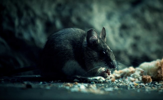 Hantavirus confirmed death! Another new coronavirus?