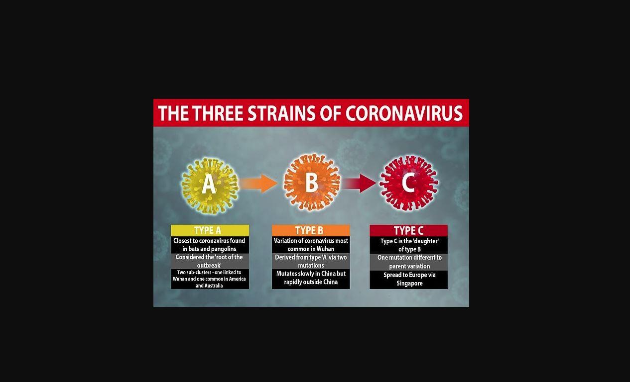 strains of coronavirus